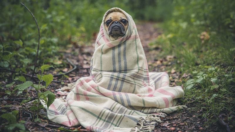森の中で毛布にくるまっている一匹の犬