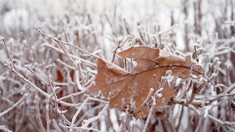 霜がかかった枯れ葉と枯れ枝